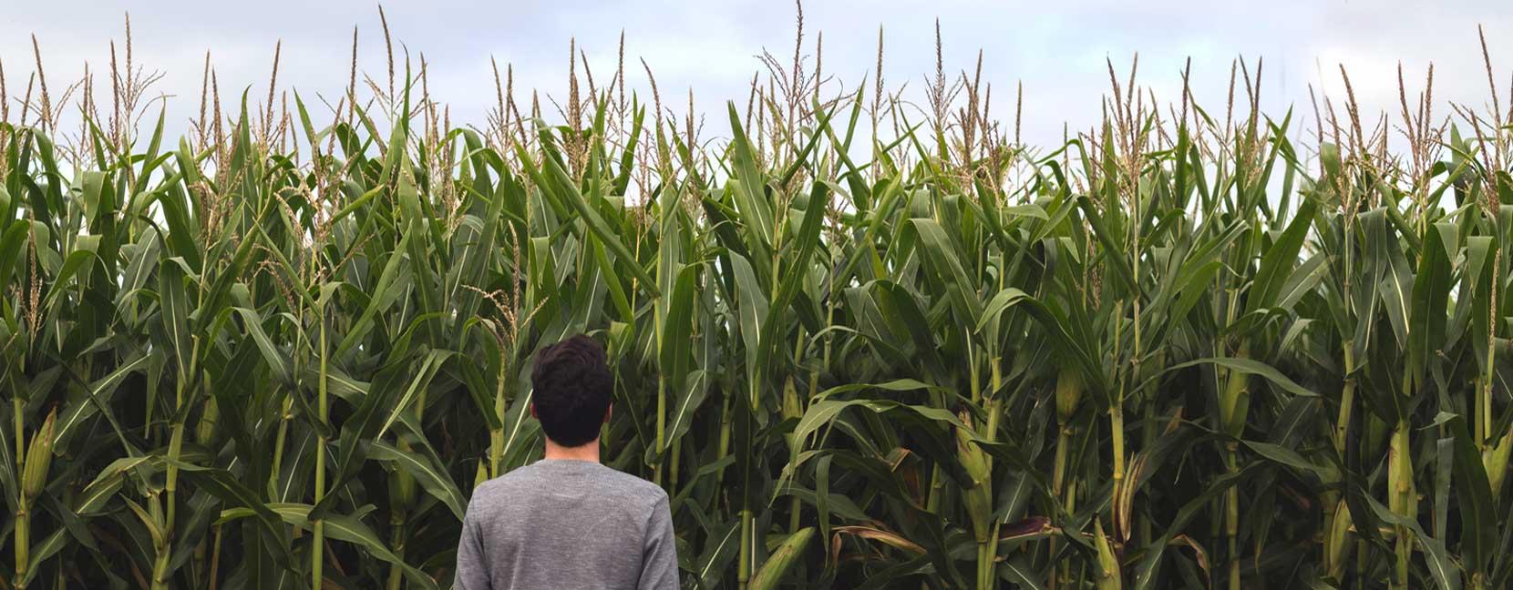 Agricultura sostenible i eficient